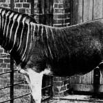 10 Animals Humans Made Extinct