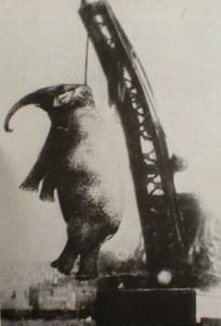Elephantmary