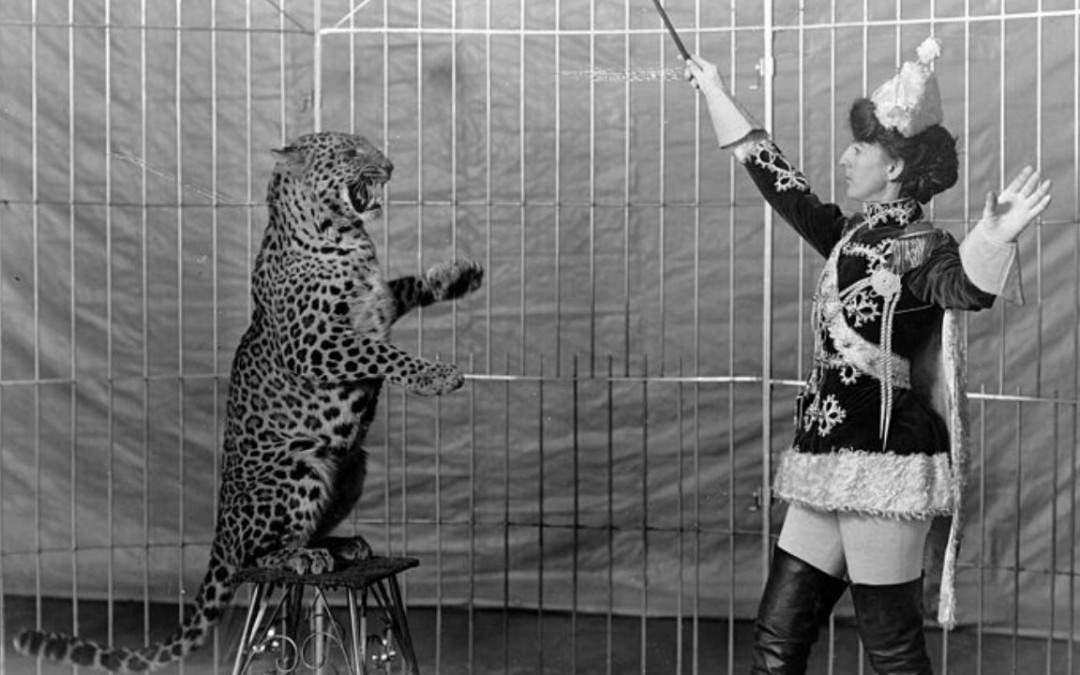 5 Most Dangerous Circus Acts Gone Wrong