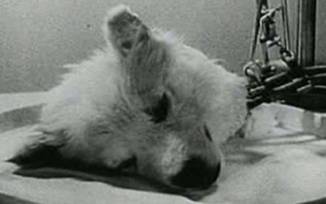10 Darkest Real Animal Experiments