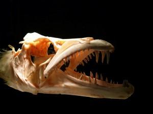 skull-164532_1280
