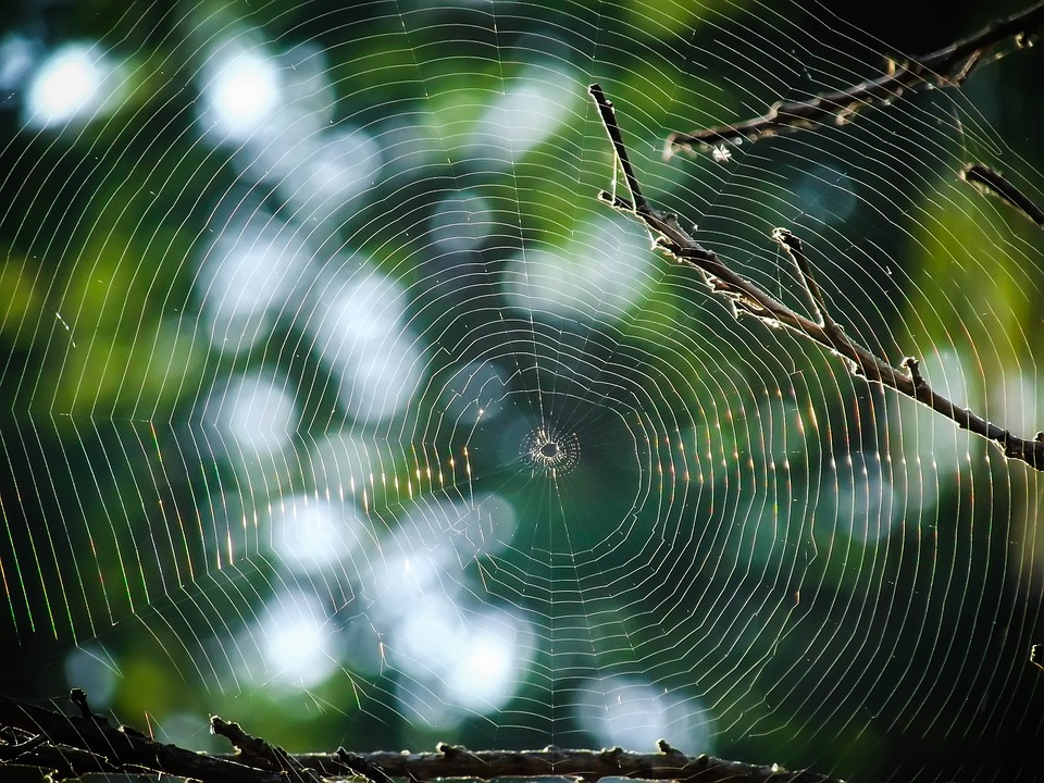 spiderweb-888466_960_720