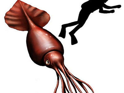 Colossal Squid - Giant Sea Creatures - 400px x 300px