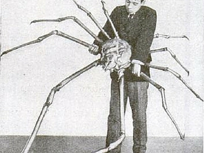 Japanese Spider Crab - Giant Sea Creatures - 400px x 300px