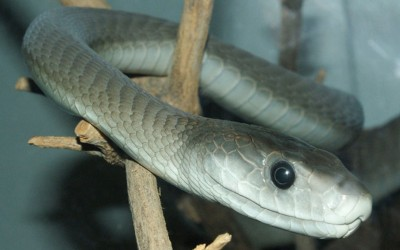 5 Most Poisonous Snakes On Planet Earth