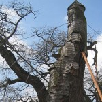 The World's Most Mysterious Tree House