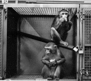 primate_cage