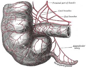 Gray536 Vestigial