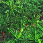 10 Uncontacted Tribes Avoiding Civilisation