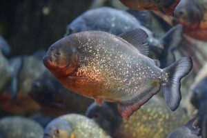 fish-1162057_1280 bizarre deaths
