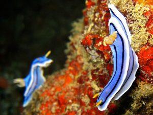 800px-Chromodoris_lochi_(AA3) strange sea creatures