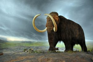 800px-Woolly_mammoth extinct animals
