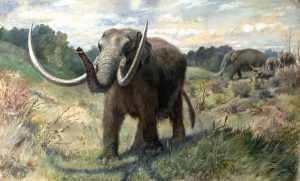 Knight_Mastodon extinct animals