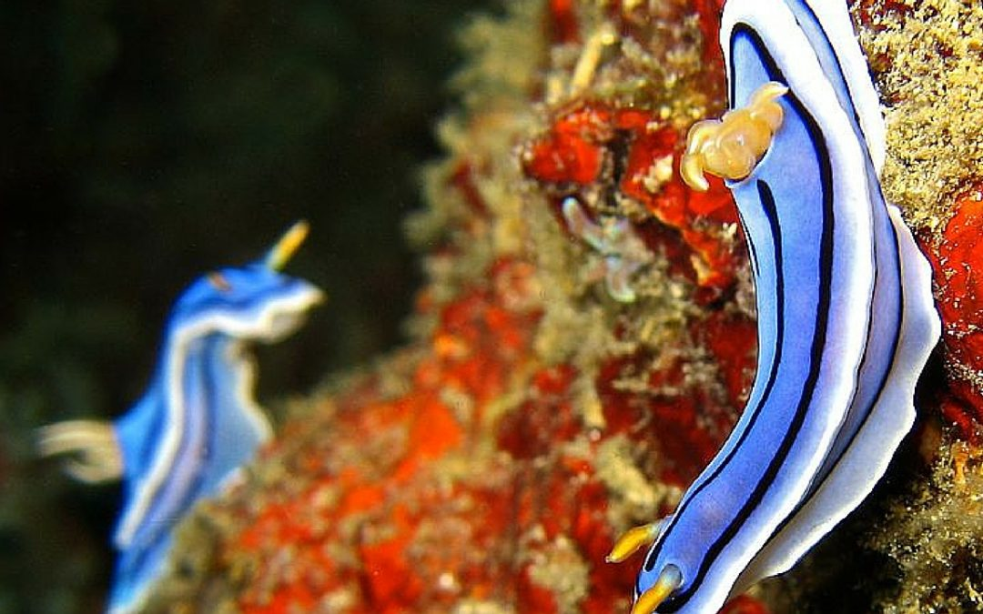 10 Unbelievably Strange Sea Creatures