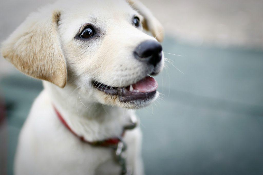 dog-425067_1920