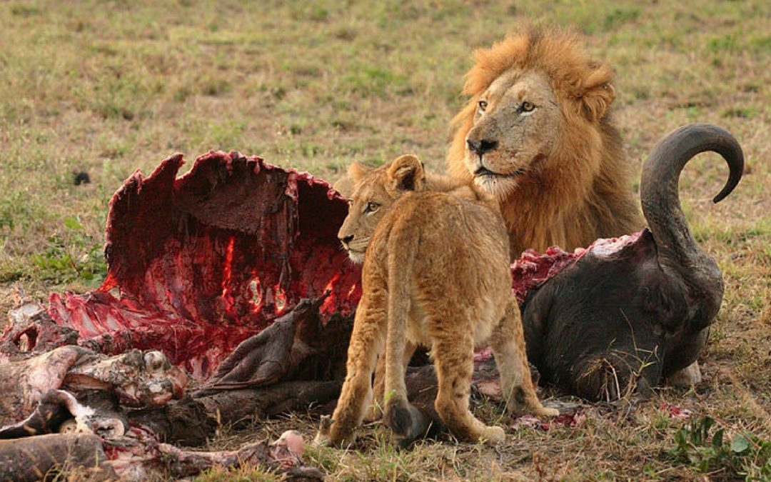 10 Of The World's Deadliest Animals