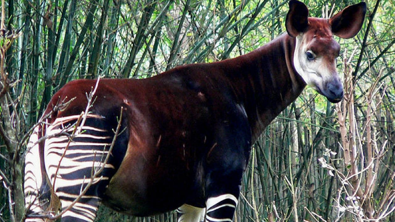 rarest animals in the - photo #39