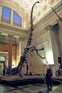 dinosaur facts barosaurus_mount_1