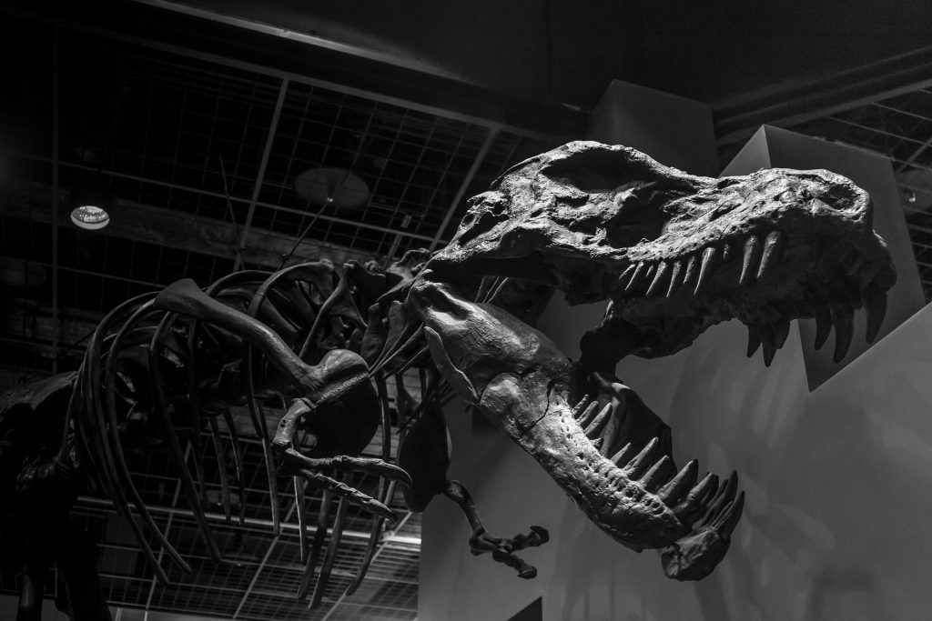 Dinosaur Facts monochrome-1378799_1920