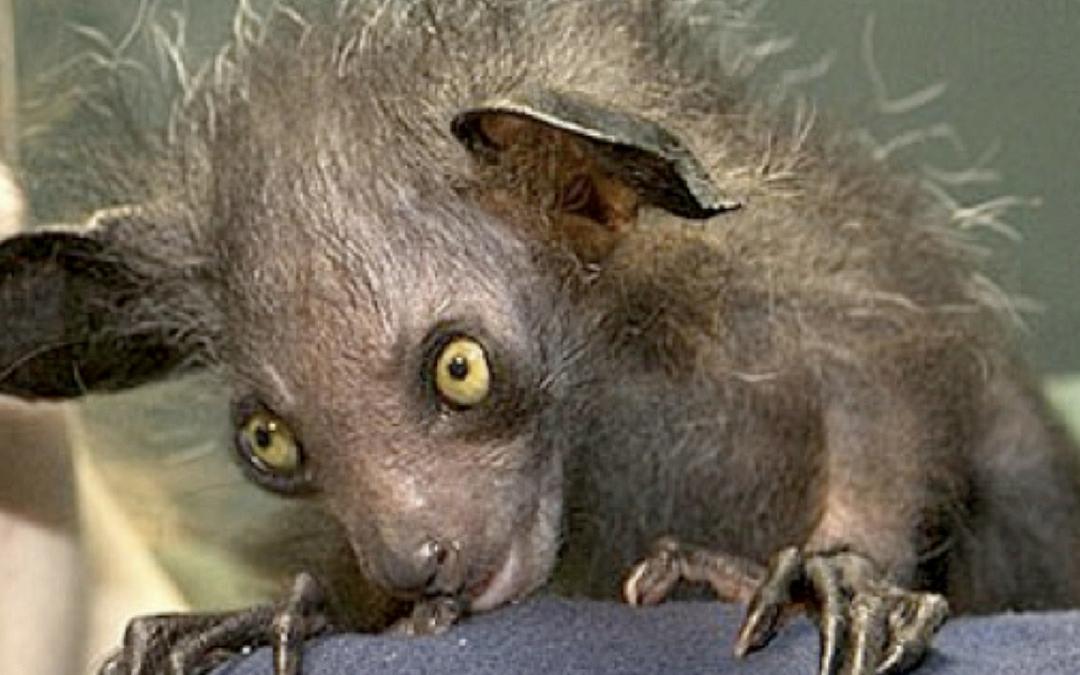 animals strange shock eskify