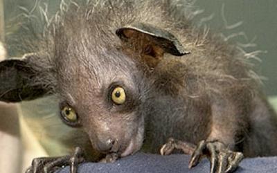 10 Strange Animals That Will Shock You