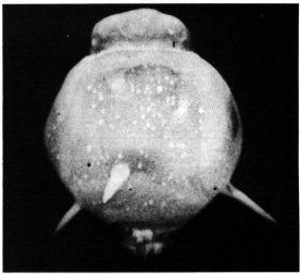 nuclear bomb effects Hardtack_II_Lea_001