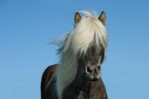 caligula horse-1330690_1920