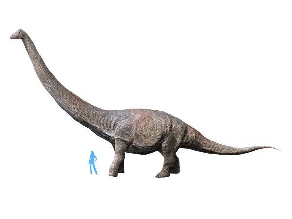 Dreadnoughtus_NT_small