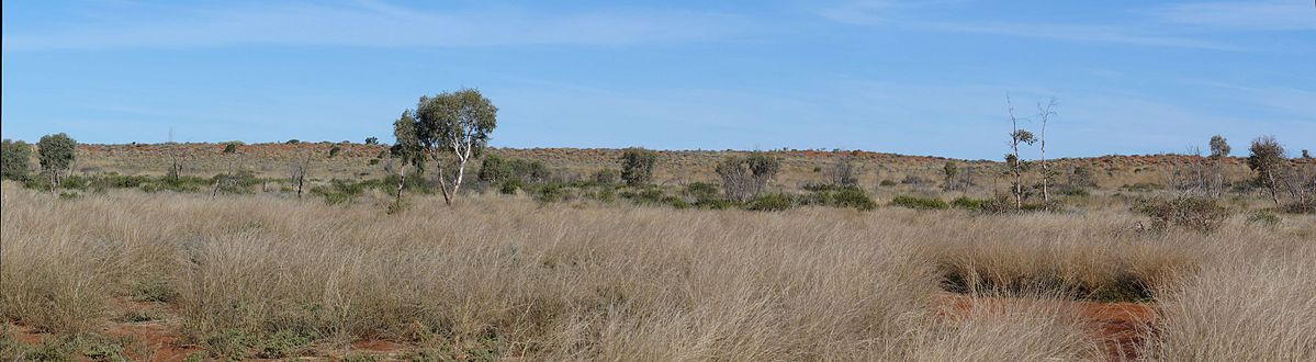 Pano_of_Gunbarrel_grasslands_and_dune_in_the_Gibson_Desert_Nature_Reserve