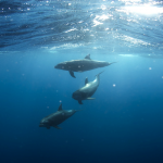 10 Dolphin Facts That Reveal How Terrifying They Truly Are