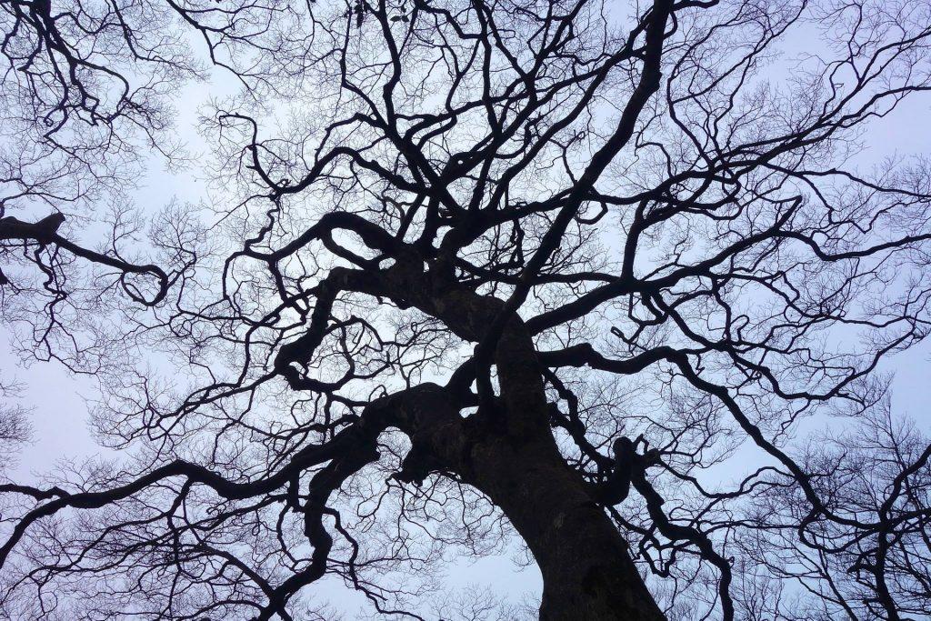 woodland-669737_1920