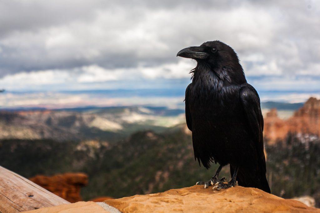 crow-828944_1920 feudal system