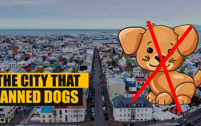 The City Where Dogs Are ILLEGAL – Reykjavik Dog Ban
