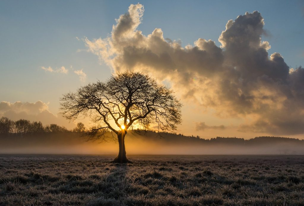 Rhys a Meinir Skeleton Tree