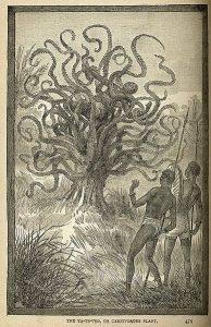 Madagascar forest mysteries