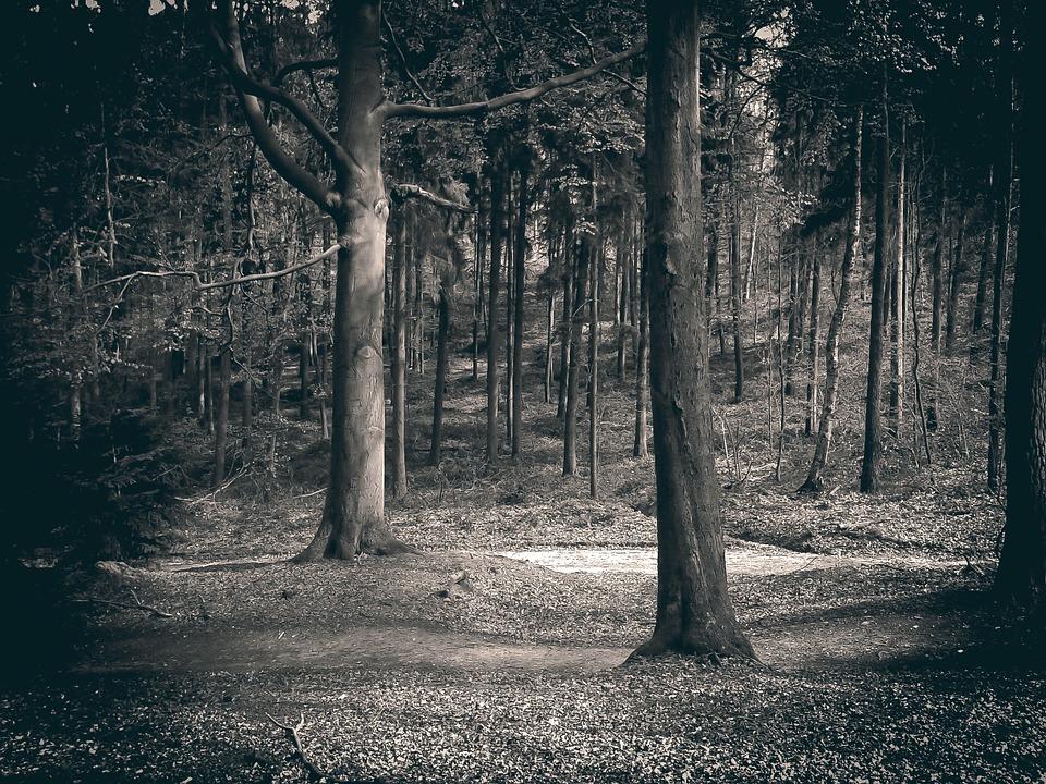 Rendlesham forest mysteries